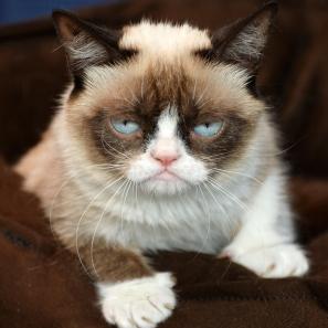 Grumpy-Cat-5